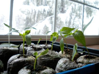 poor little seedlings